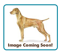 Southern California Vizsla Rescue - Available Adoptions - Doc
