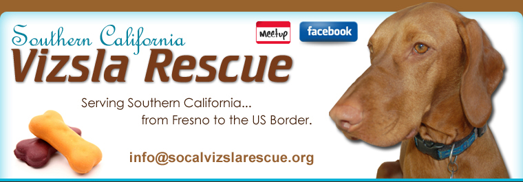 Southern California Vizsla Rescue